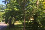 Free Trees Still Available